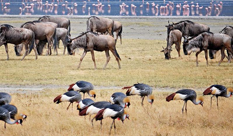 tourisme_afrique
